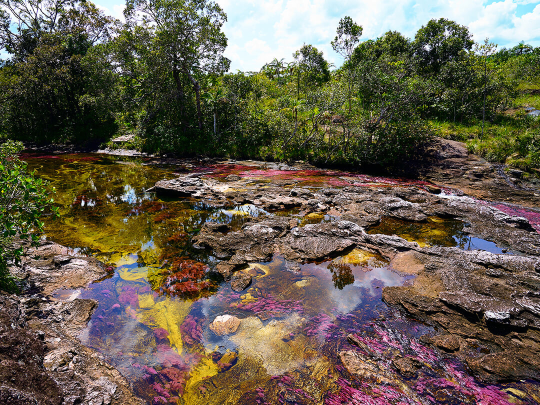 River of Caño Cristales Meta