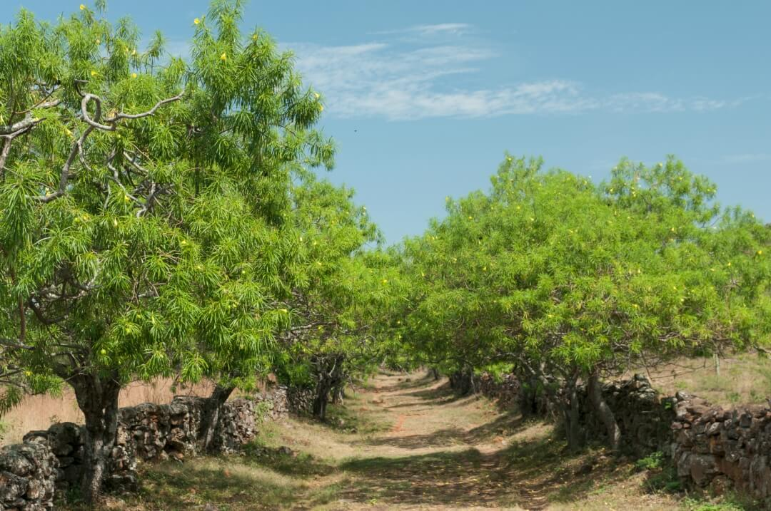 Road full of trees