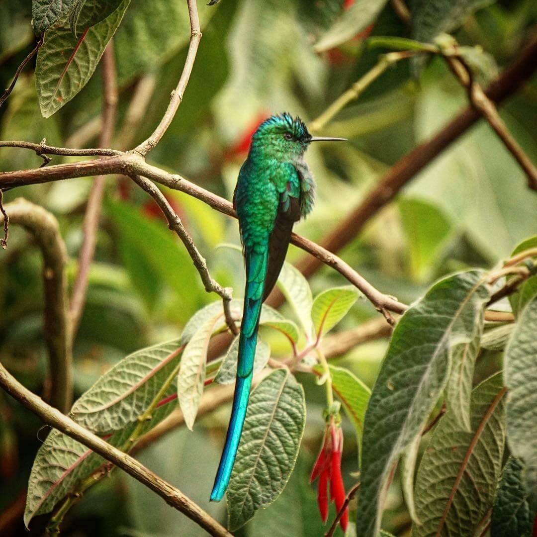 Avistamiento de aves en el Valle del Cocora