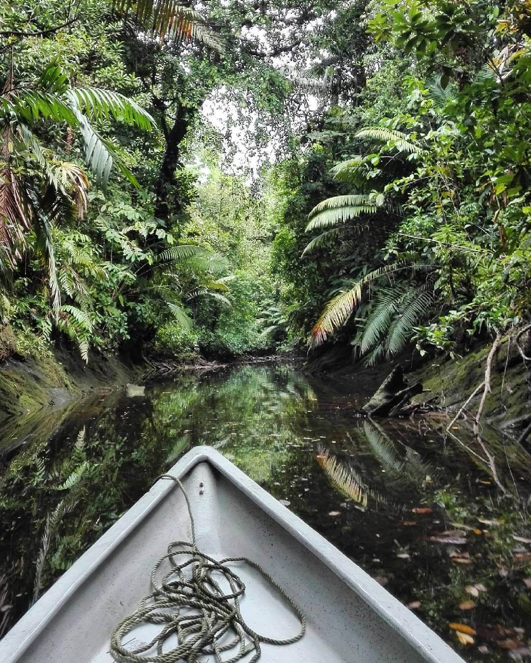 Navegando entre manglares