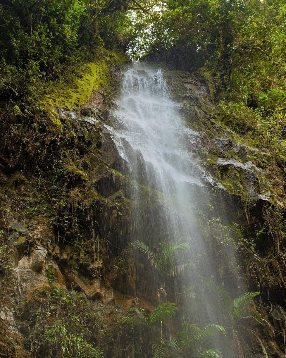 Waterfall in the Cave of the Guácharos