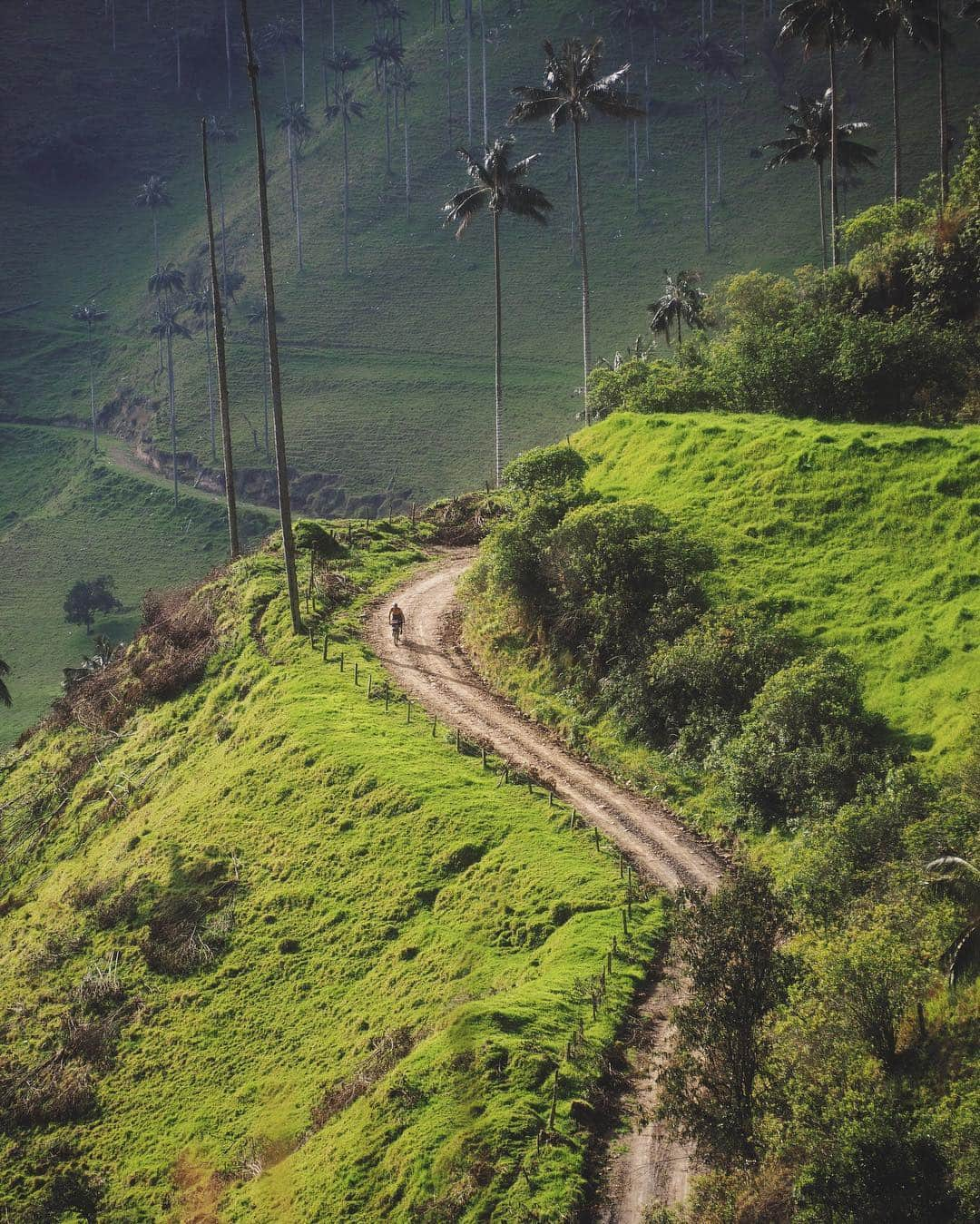 Bike through the Cocora Valley