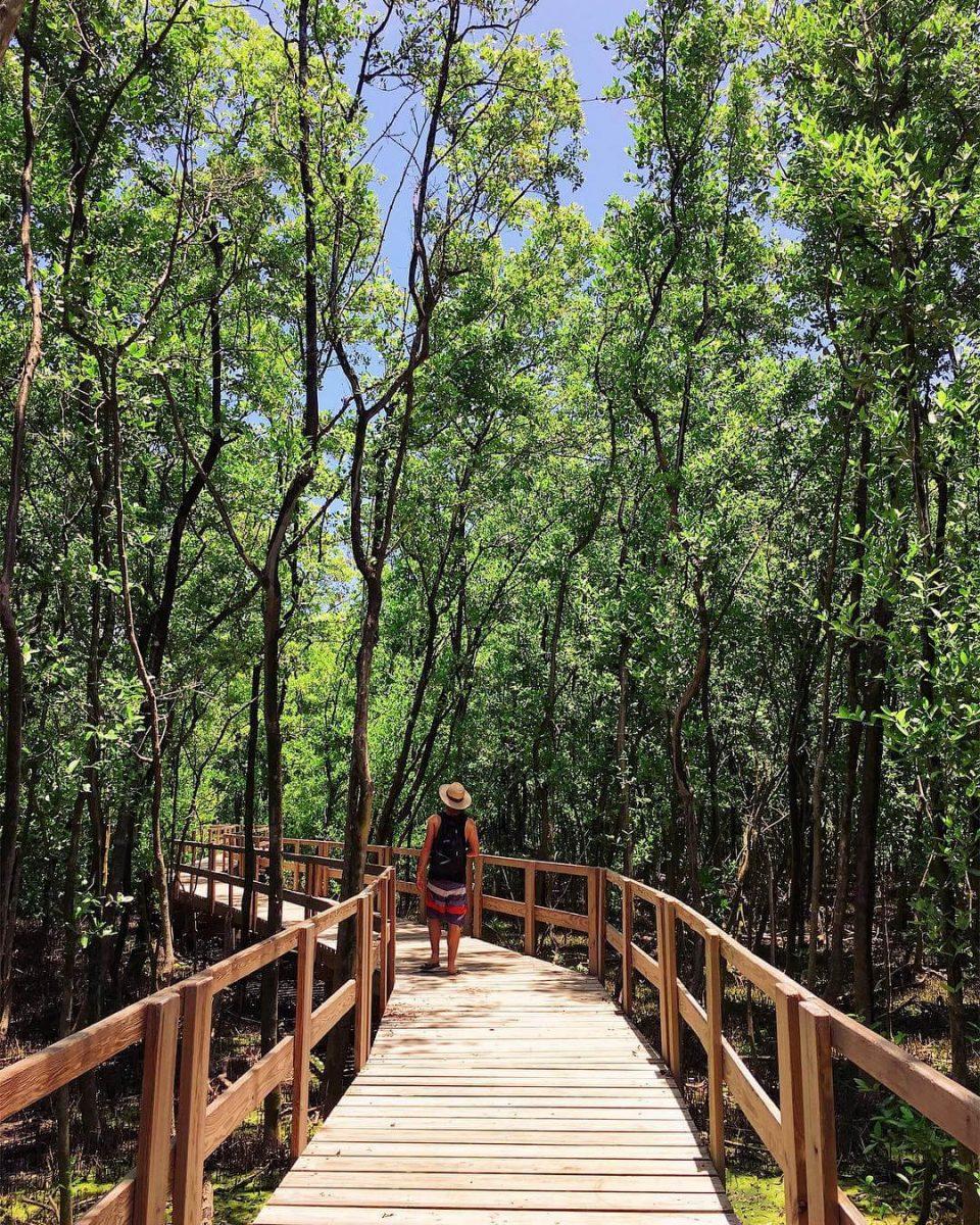 Caminando entre los manglares de Old Point San Andrés
