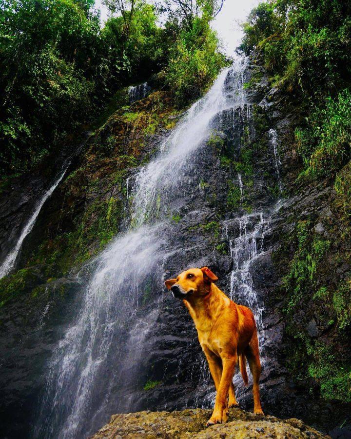 Waterfall El Angel Falls Antioquia Colombia
