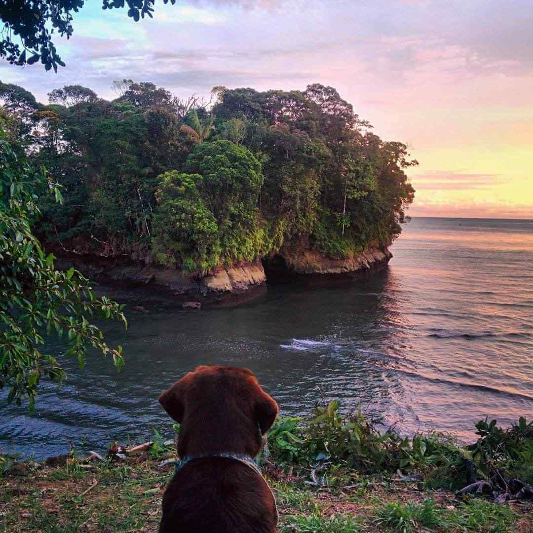 Dog watching the Colombian Pacific