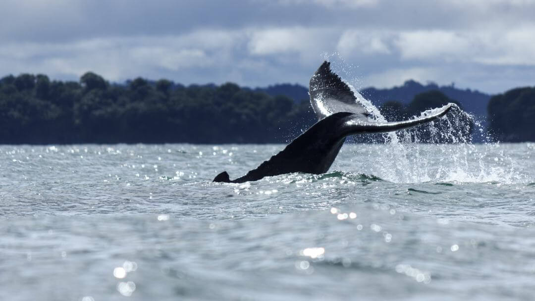 Avistamiento de ballenas en Bahía Málaga
