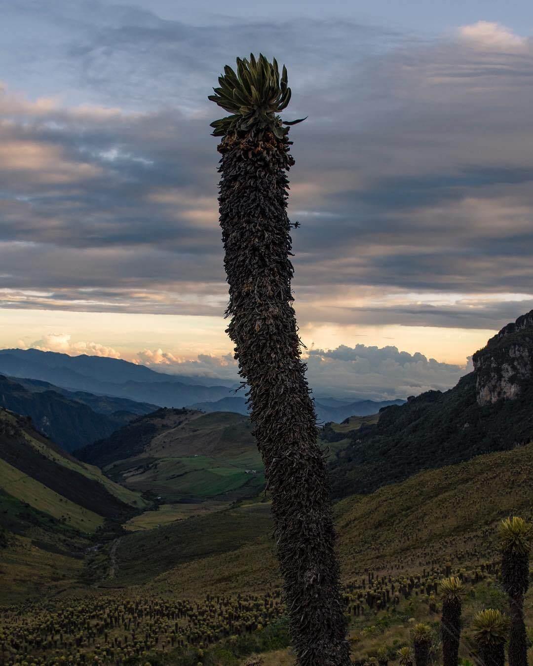 Senderismo en el Parque Nacional Natural Los Nevados