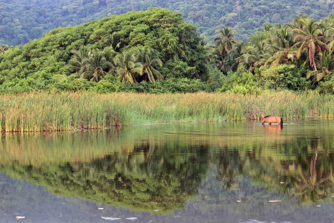 Laguna dentro del Parque Tayrona