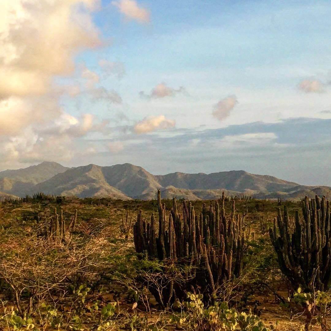 Flora del parque nacional Macuira