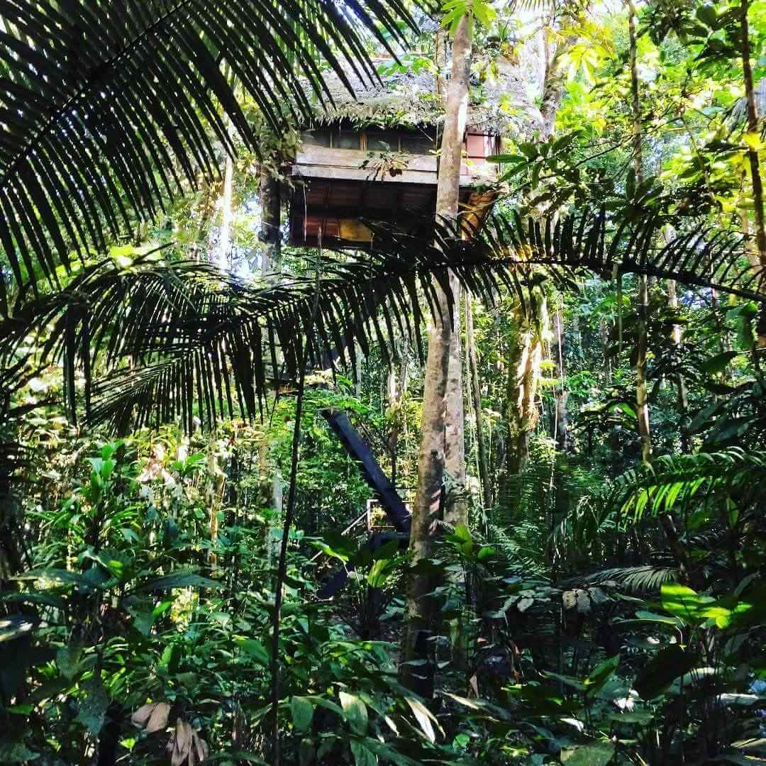 Hostel in the middle of the jungle