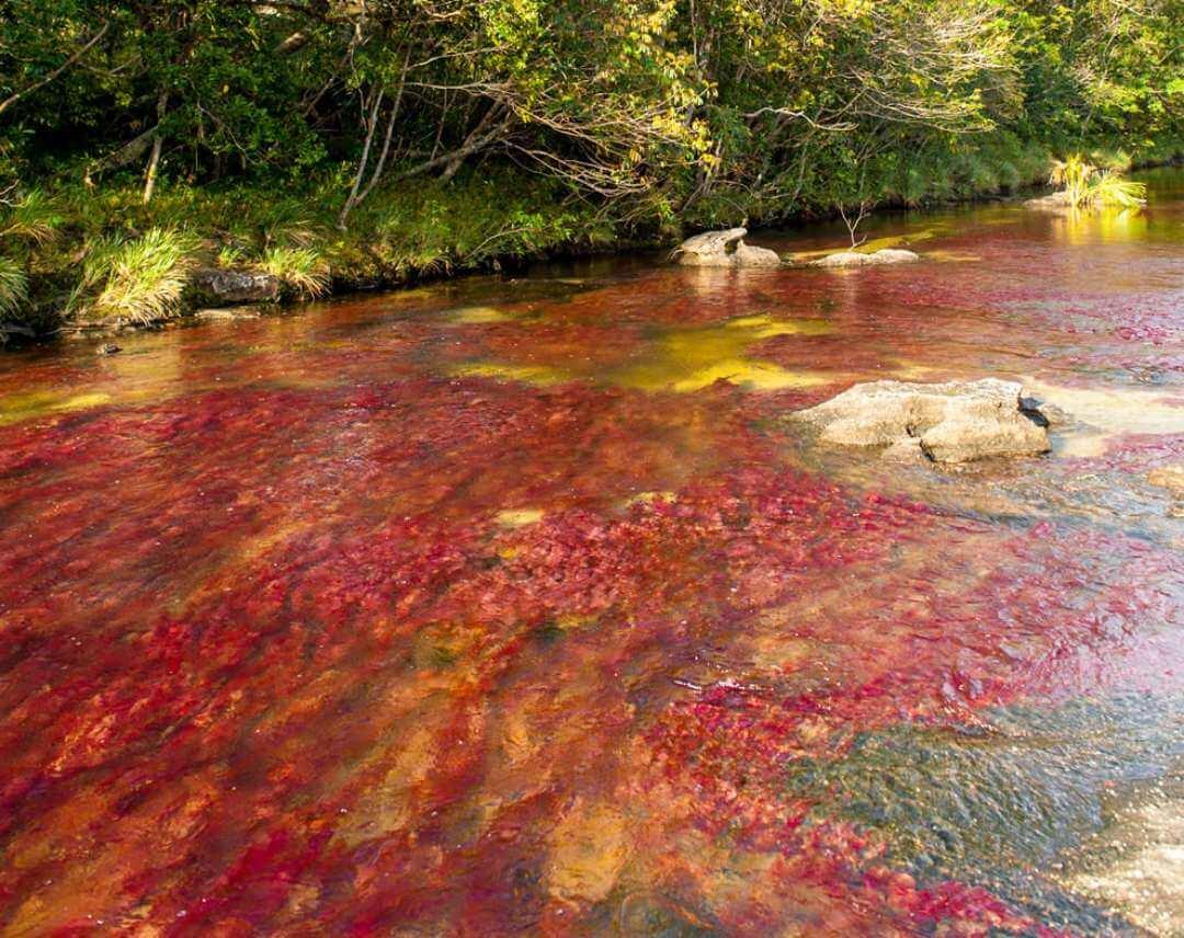 Visitar el río de los siete colores