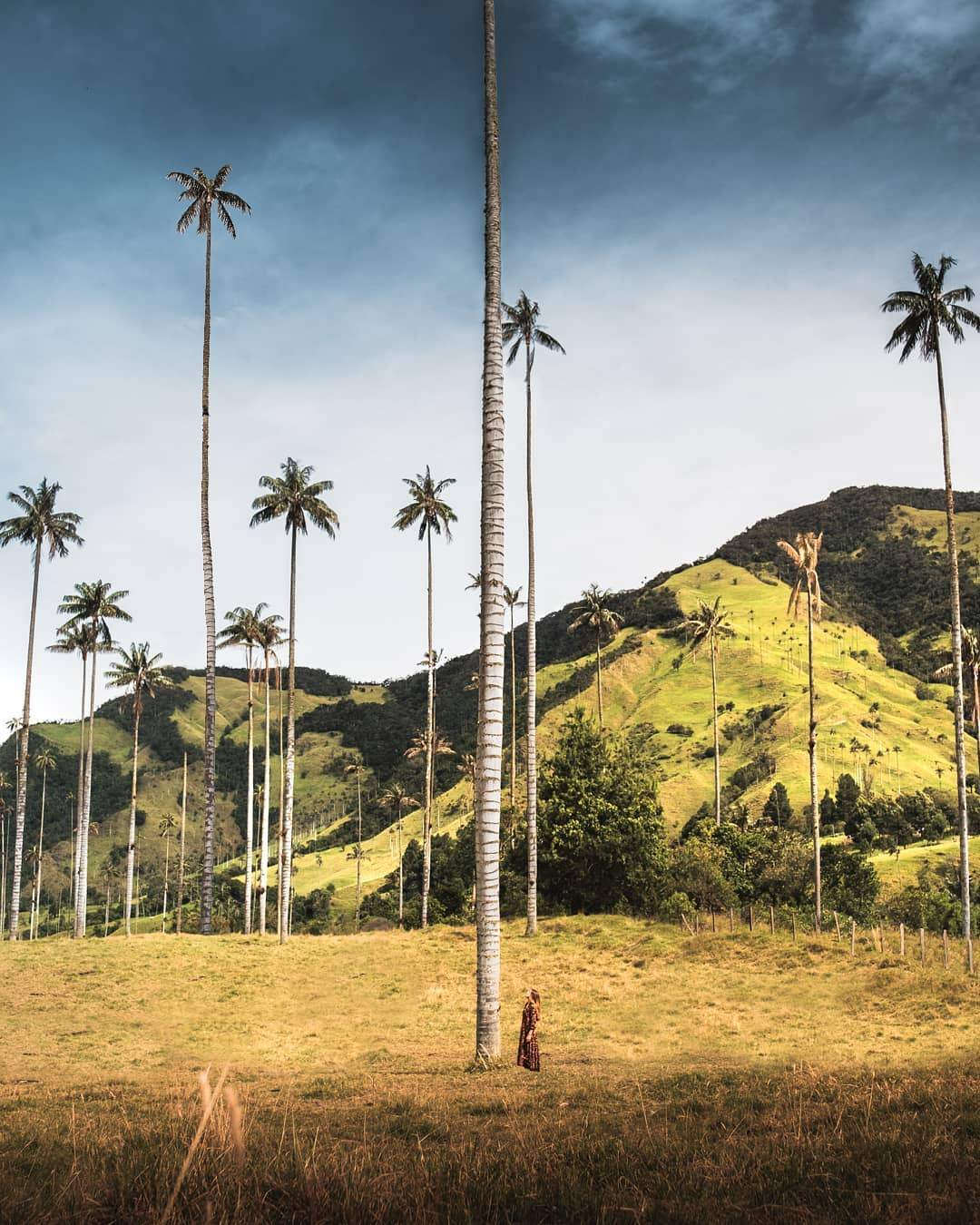Paisaje colombiano del Valle del Cocora