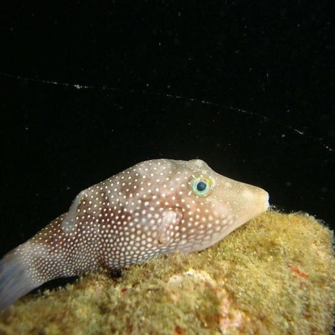 Vida marina de la Isla Gorgona