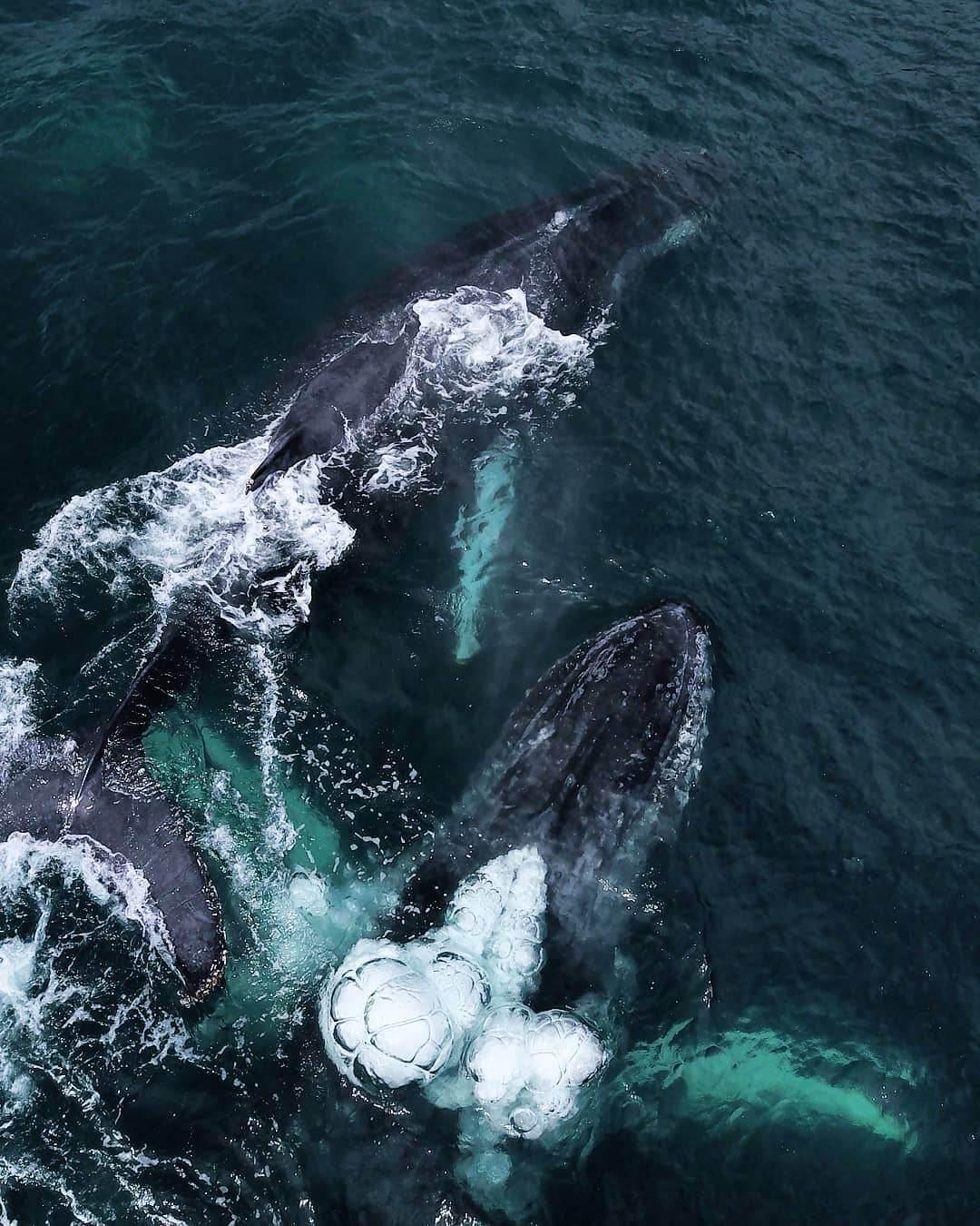 Ballenas jorobadas en Nuquí