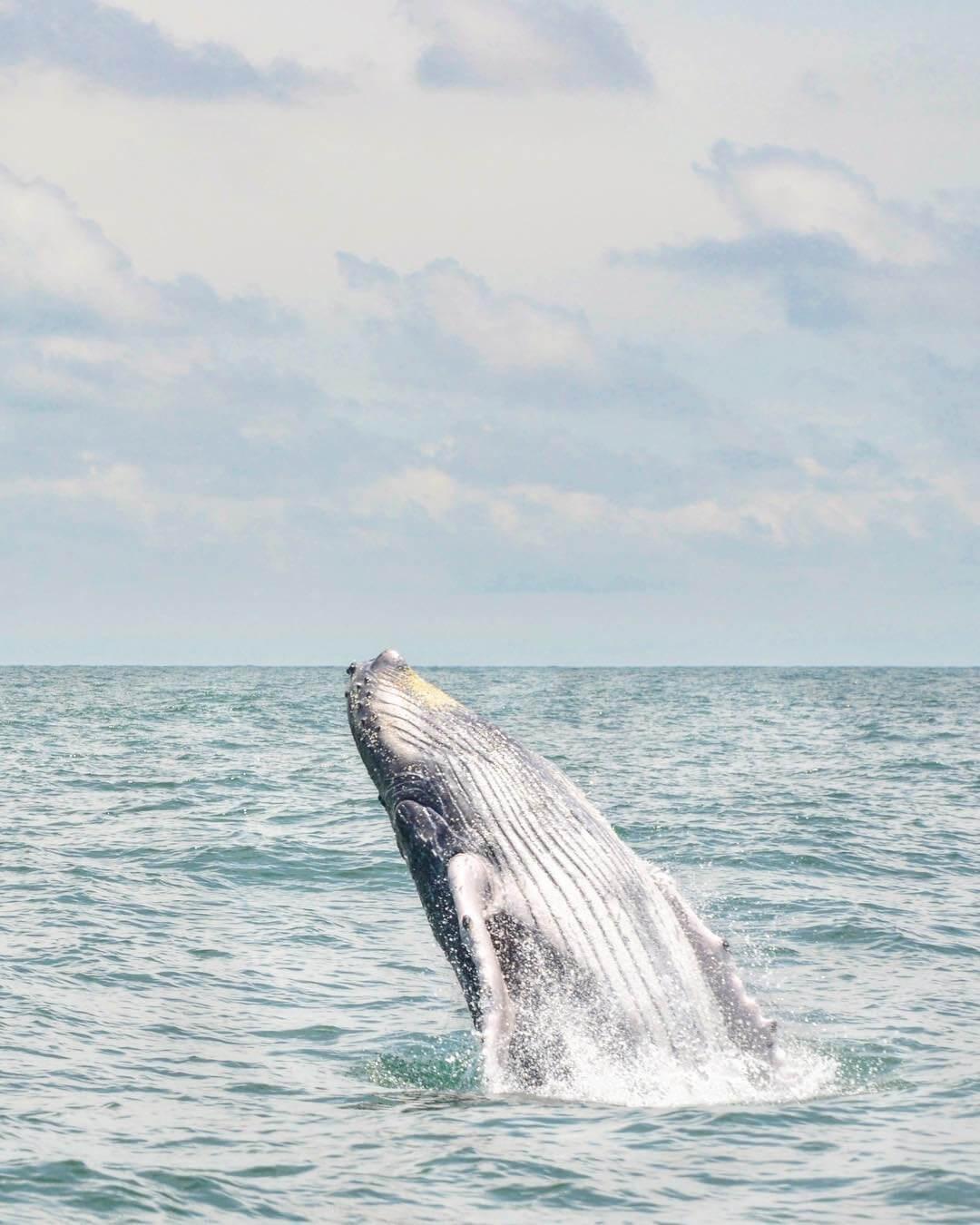 Avistamiento de ballenas cerca a Cali