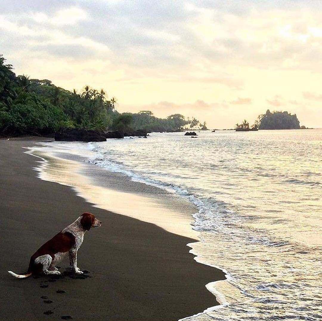 Perro en playa de Nuquí
