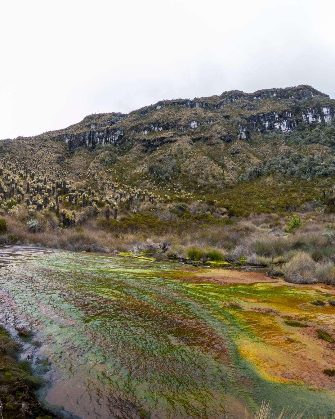 Quebrada de los 7 Colores in Los Nevados Colombia