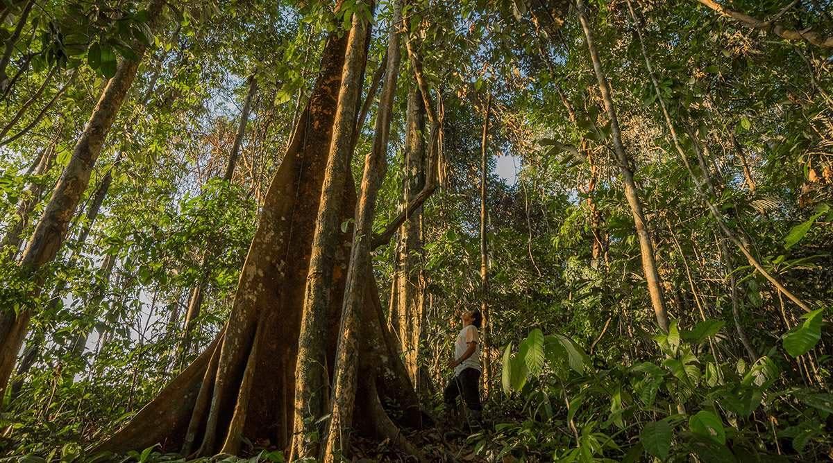 Parque Nacional Natural Amacayacu Amazonas