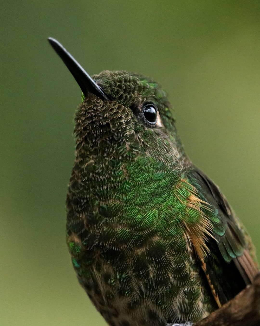 Avistamiento de aves en Salento
