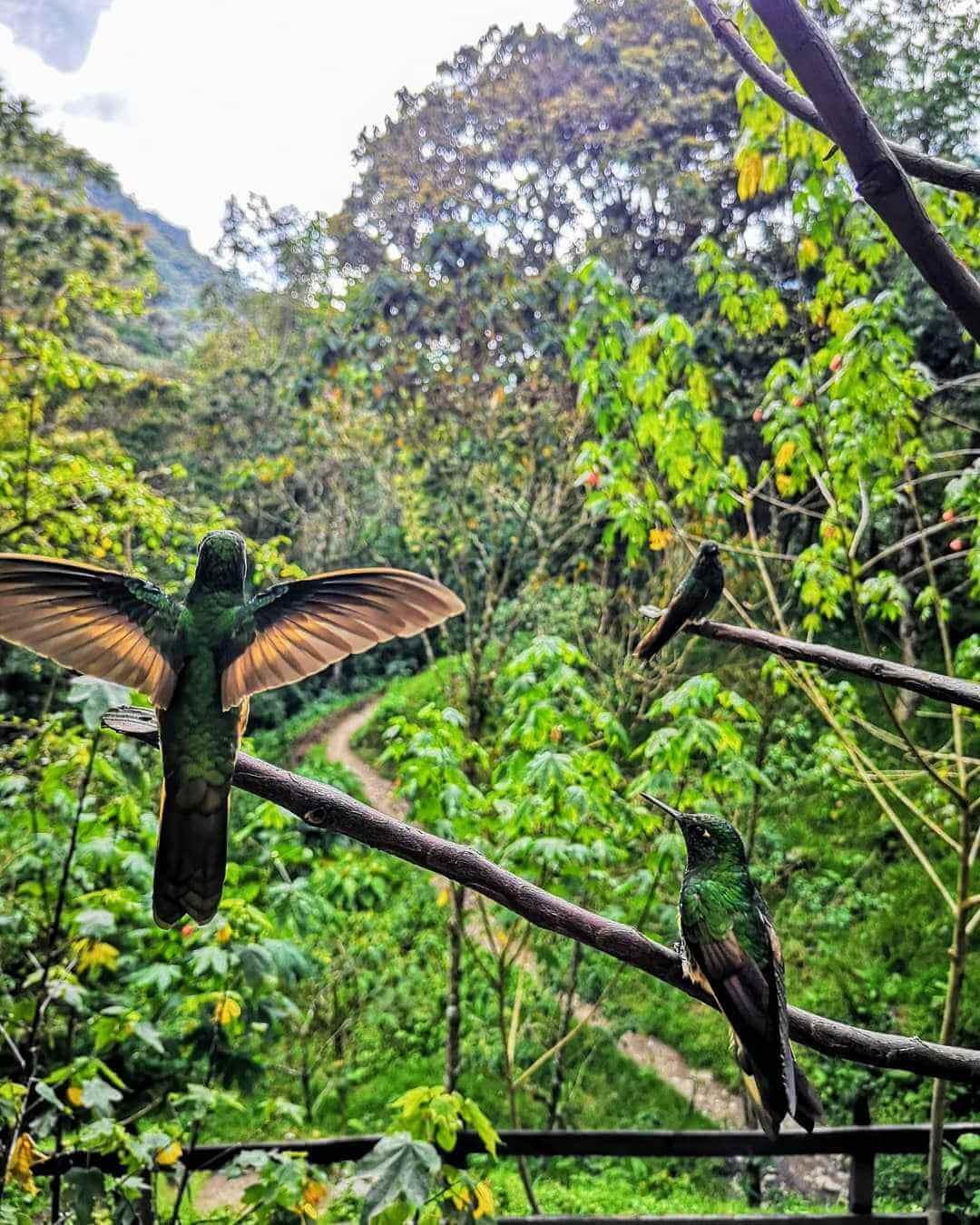Casa de los colibries
