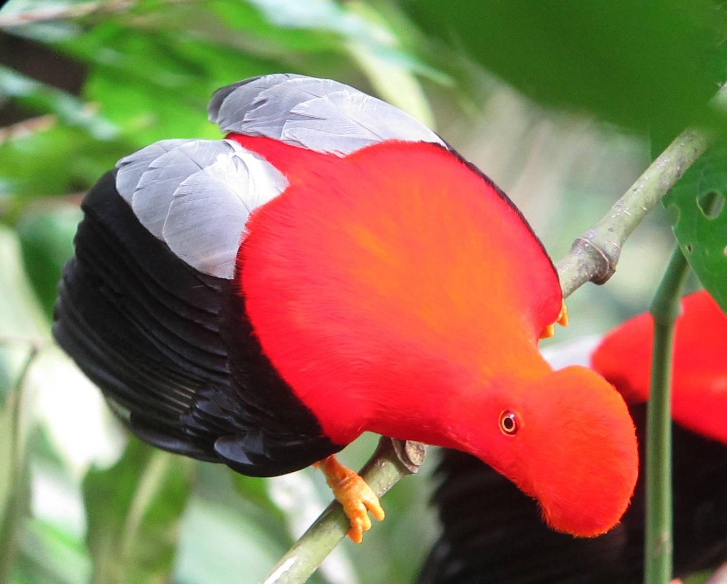 Aves de los Llanos Orientales