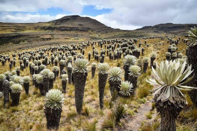 Paisajes colombianos de naturaleza