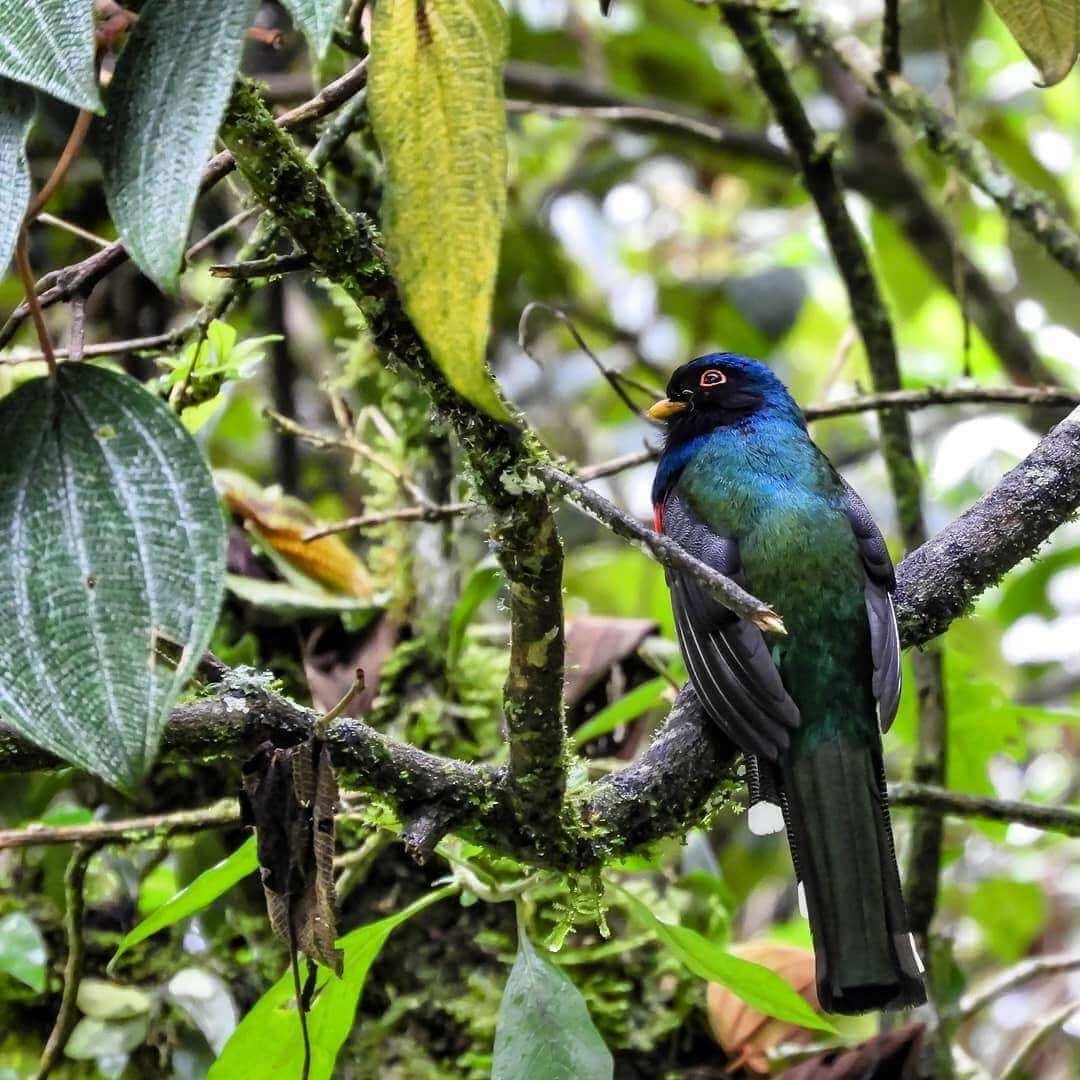 Avistamiento de aves Valle del Cocora