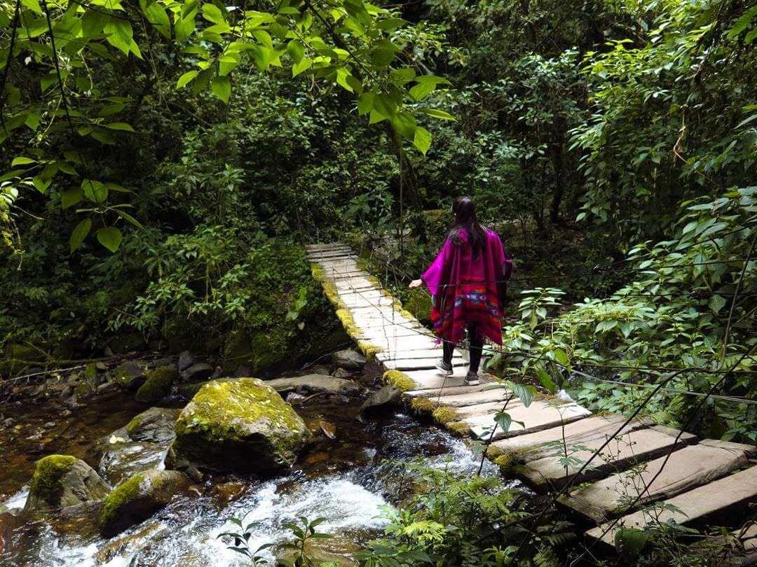 Puentes de Acaime Valle del Cocora
