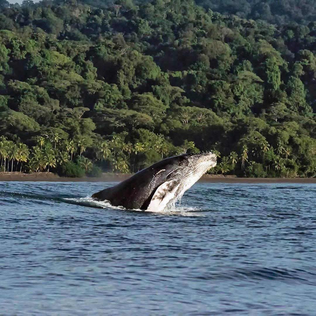 Ballenas en Nuquí