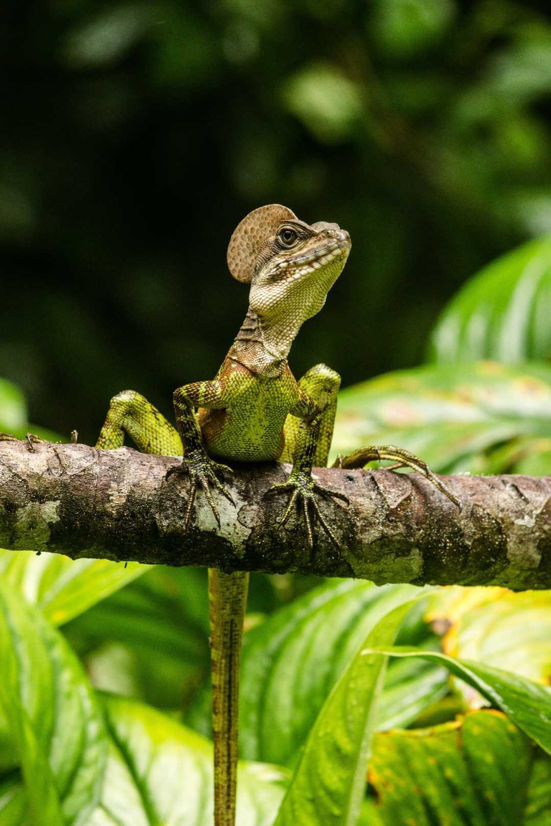Fauna de las Isla Gorgona