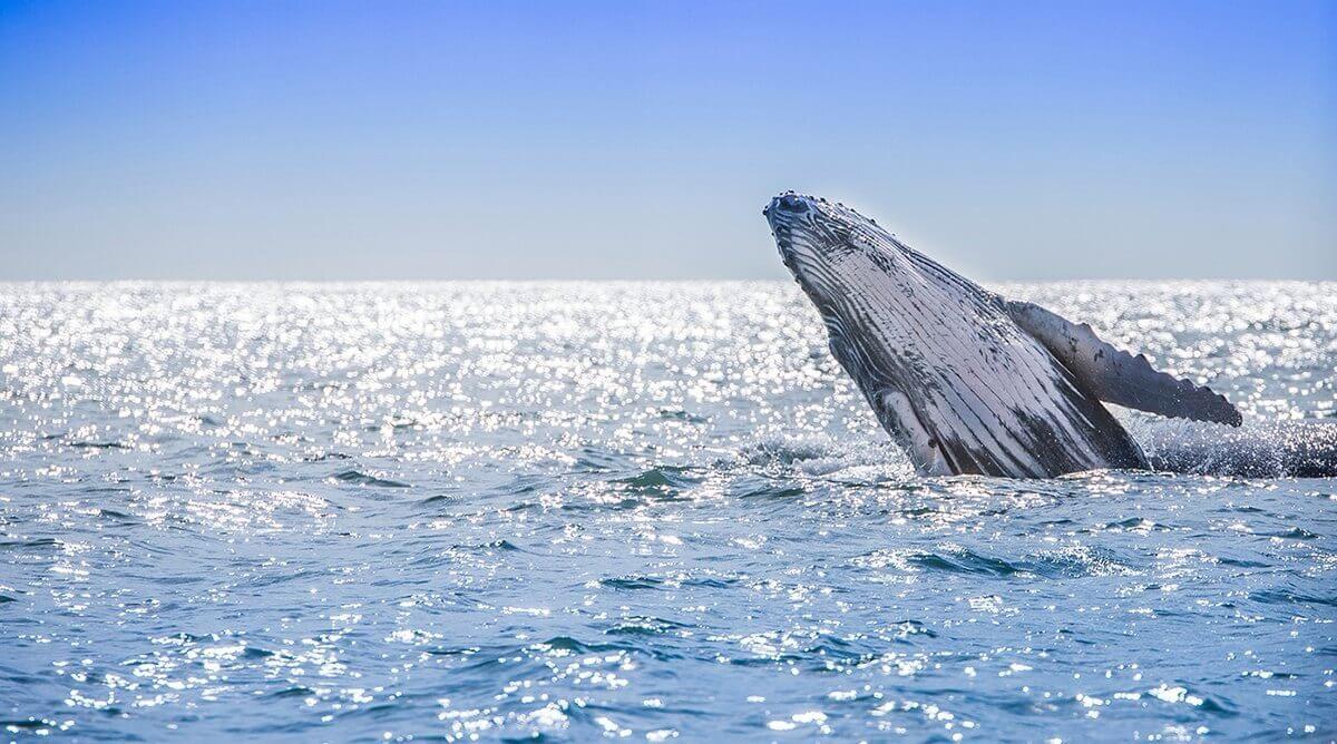 Avistamiento de ballenas 2020