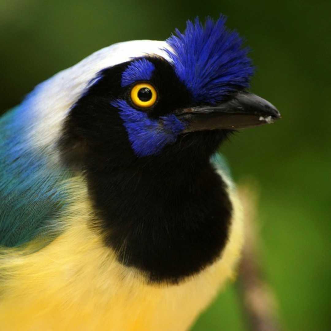 Avistamiento de aves en Támesis