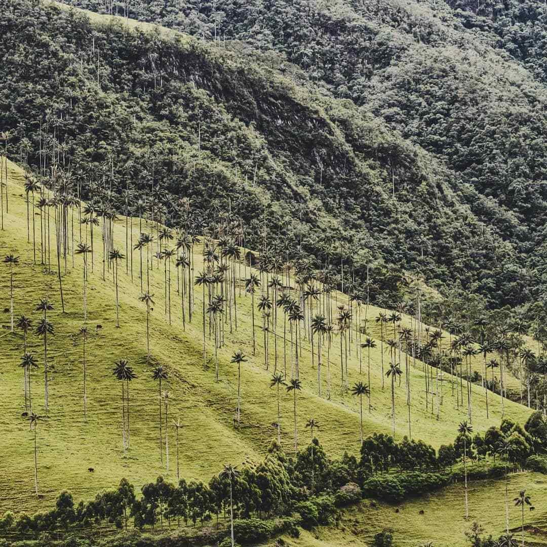 Palmas de Cerca en Colombia