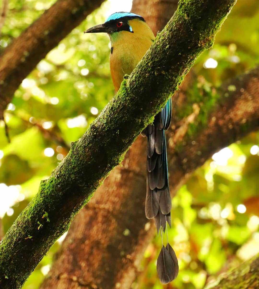 Aves de Colombia para avistar en viajes