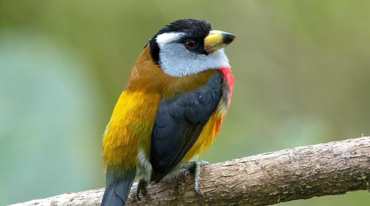 Avistar aves en Colombia