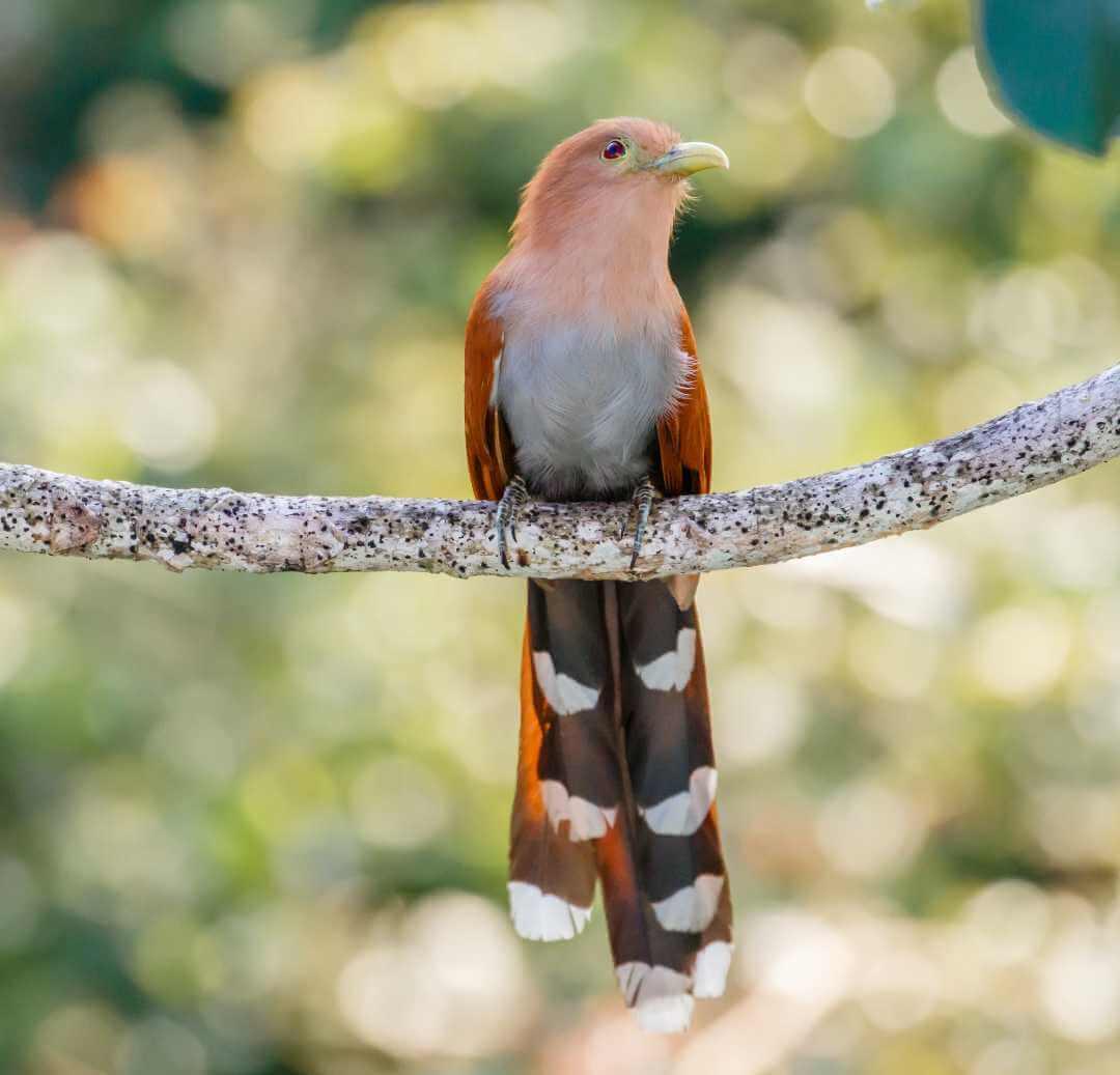 Fauna de las islas de Colombia