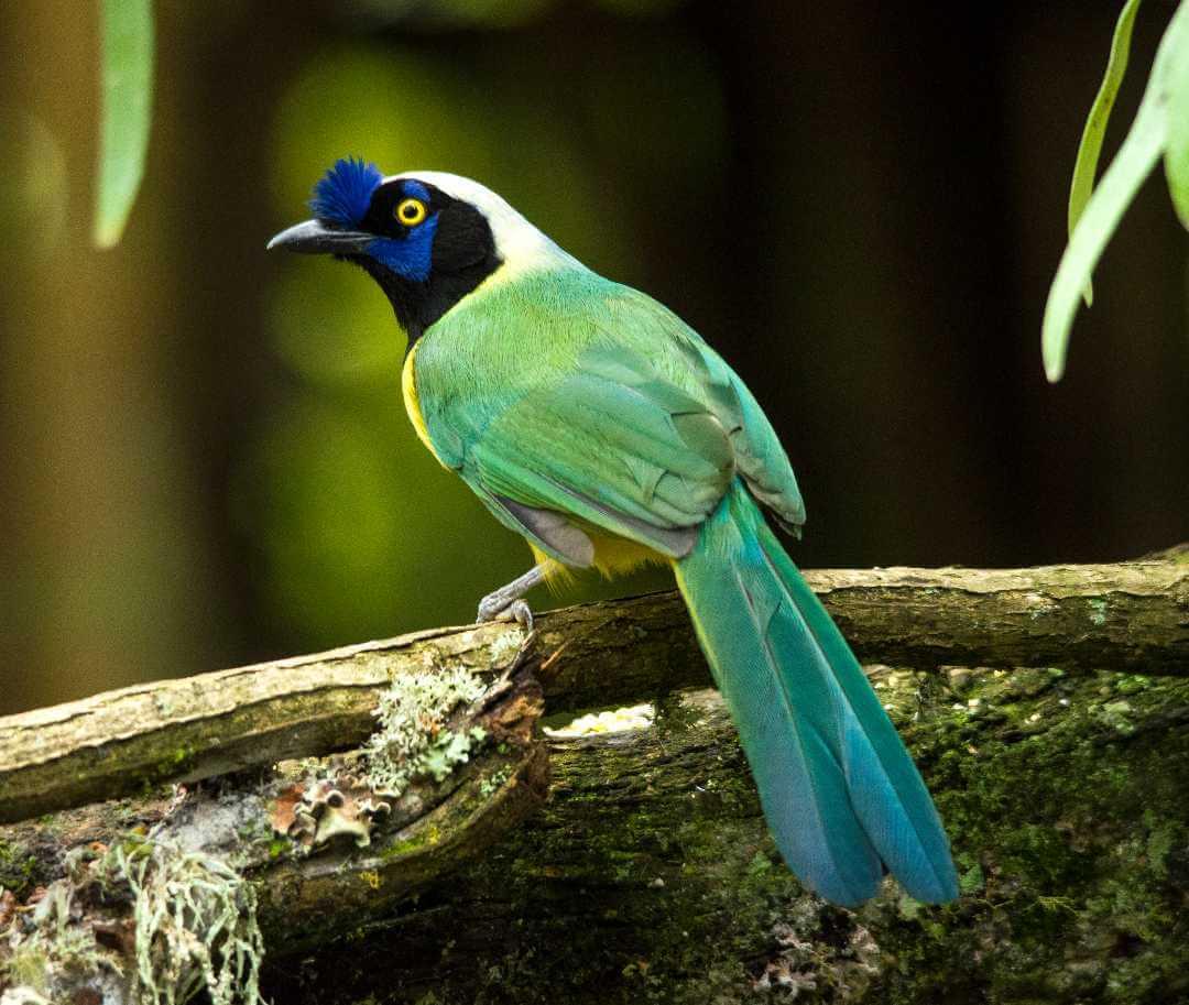 Lista de aves de Colombia