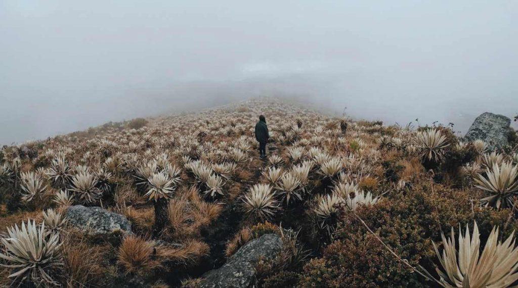 Planes a las afueras de Bogotá