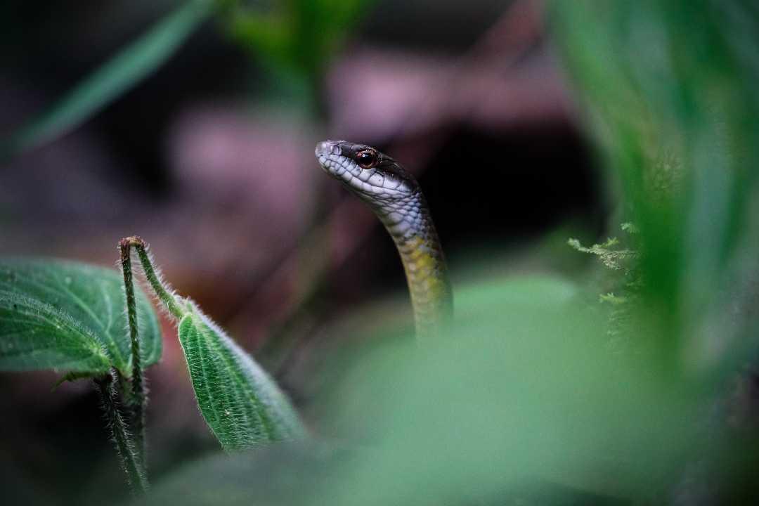 Serpiente en isla del Pacífico colombiano