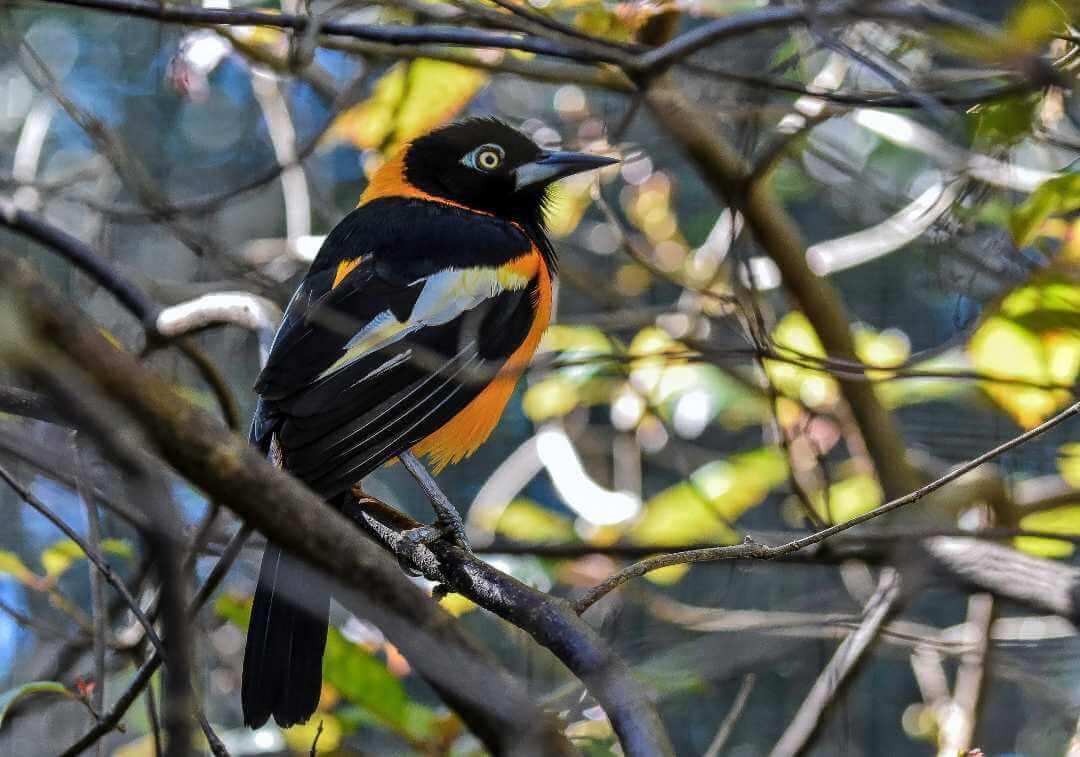 Parques naturales de Colombia para hacer avistamiento de aves