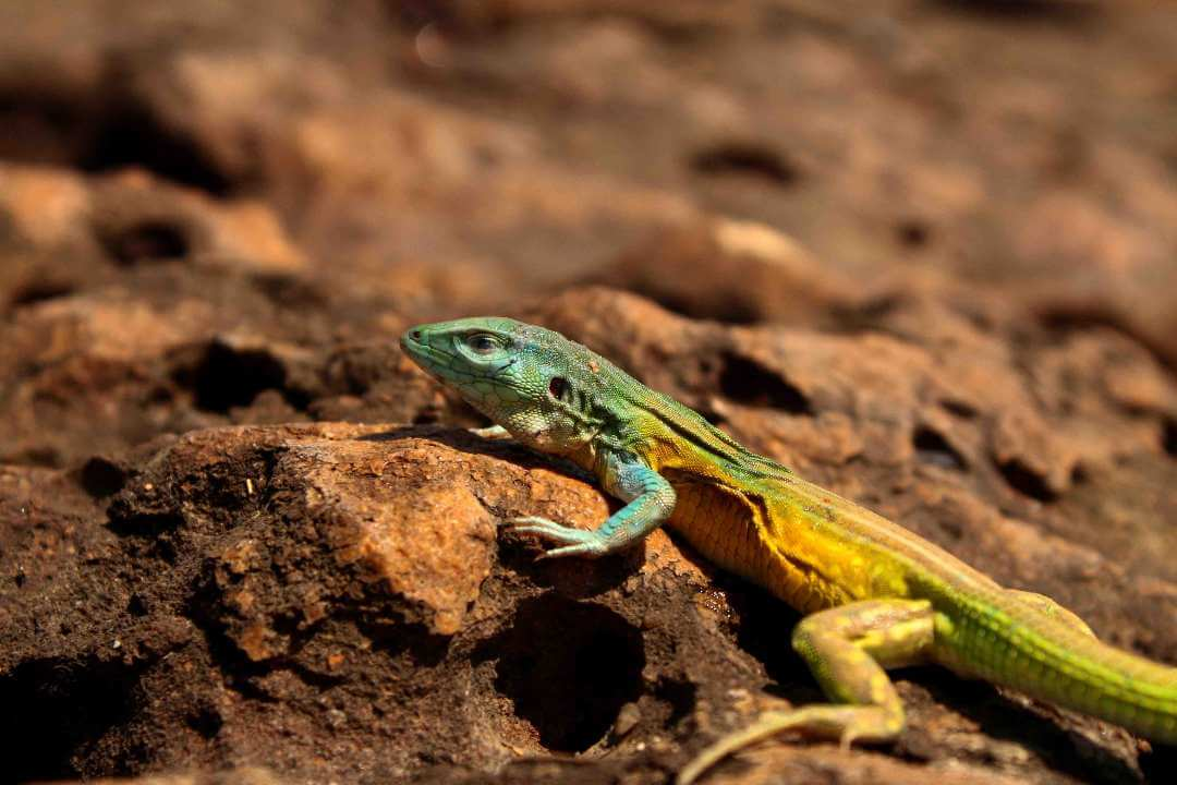 Fauna del desierto de La Guajira