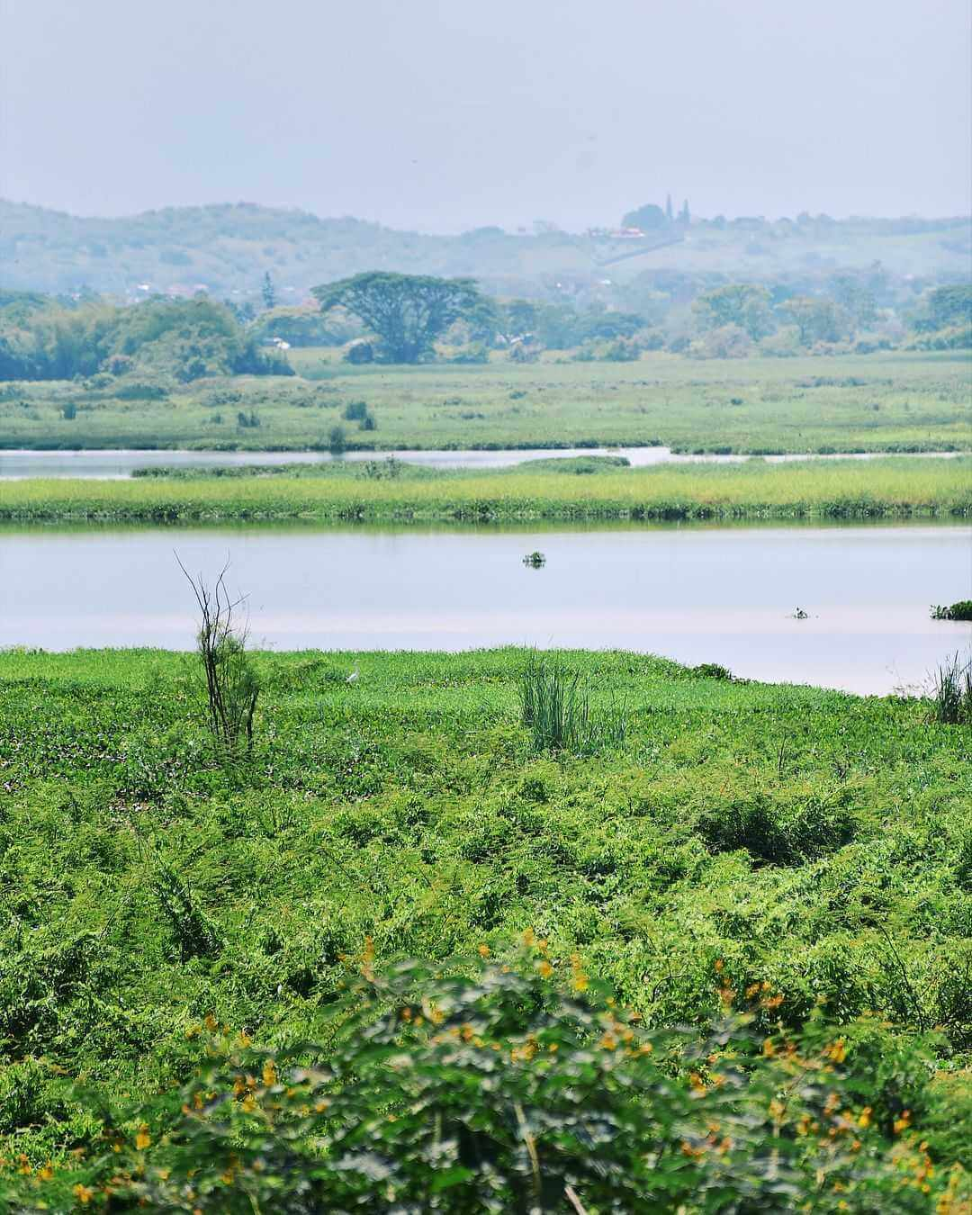Laguna de Sonso Buga