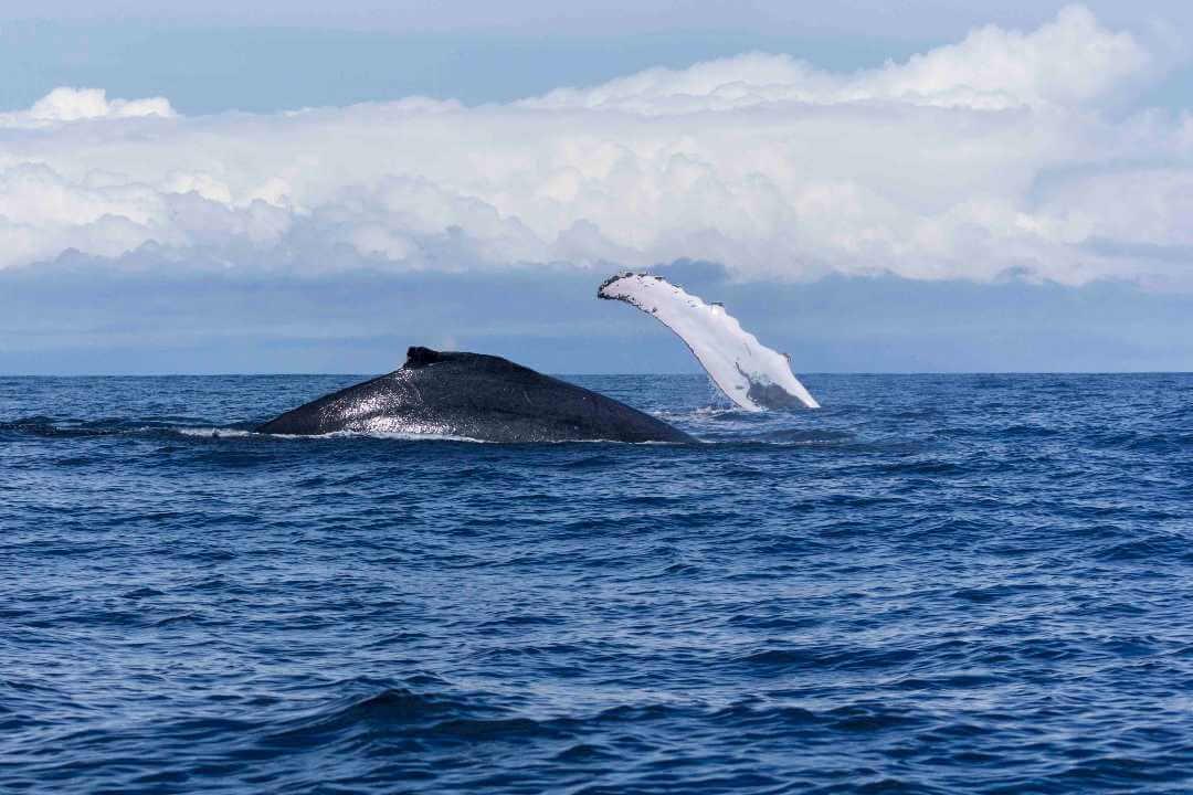 Planes ballenas en Bahía Solano