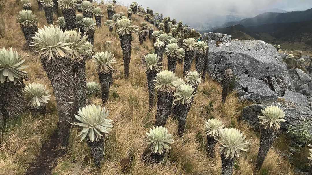 Tour a Monguí desde Bogotá