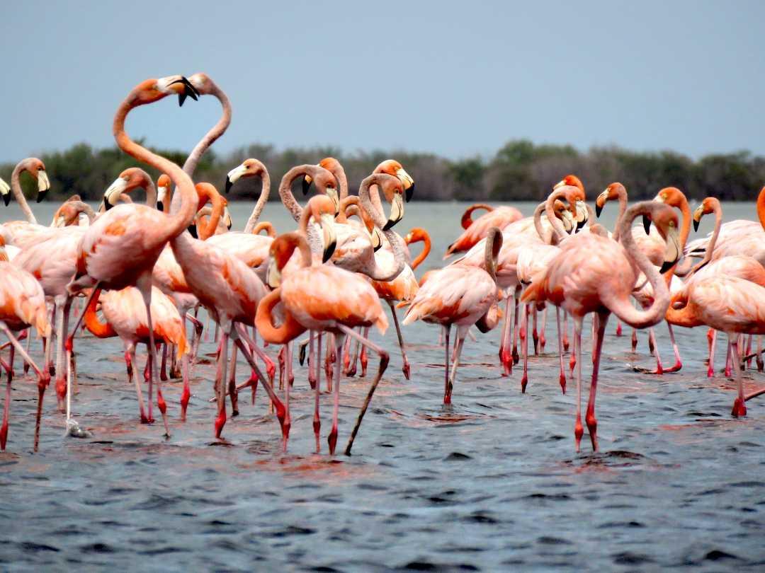 Santuario de Flora y Fauna Flamencos Camarones