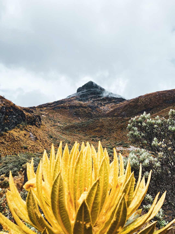 Caminata de aclimatación para visitar los Nevados de Colombia