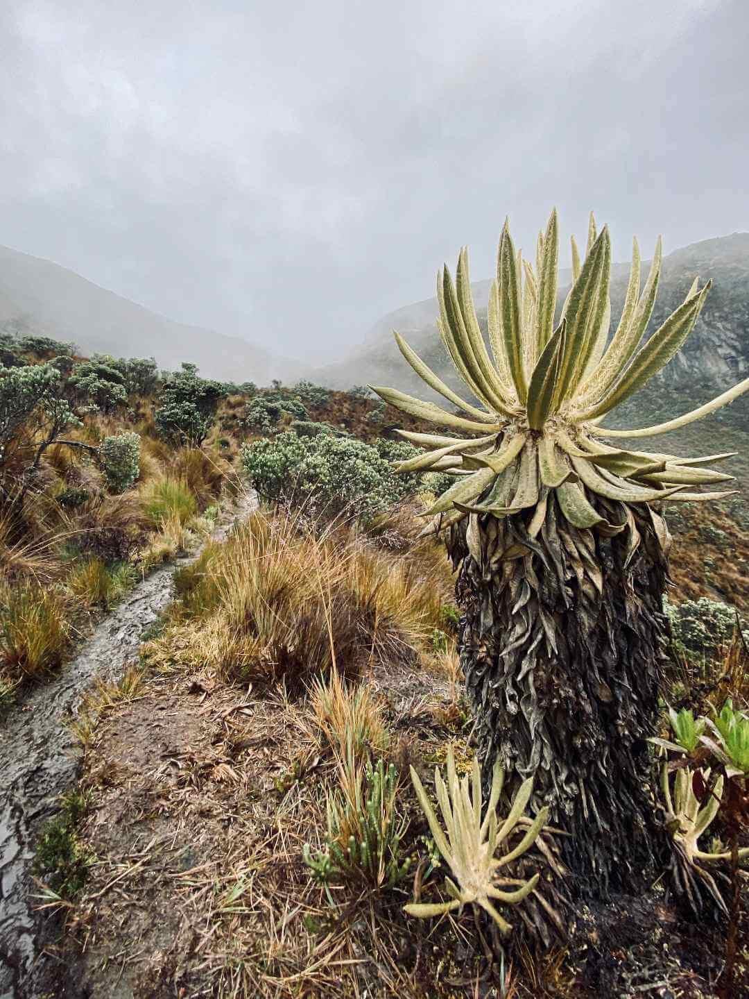 Páramo del Parque Nacional Los Nevados