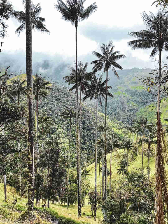 Santuario de palmas de cera finca La Carbonera