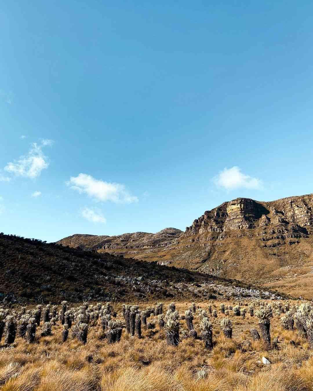 Valle de Frailejones Nevado del Cocuy