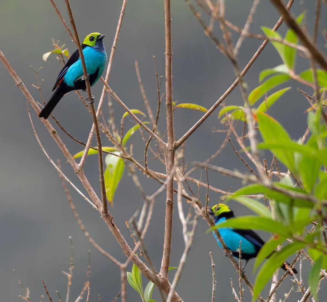 Avistamiento aves Isla Escondida